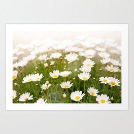White herb camomiles clump Art Print