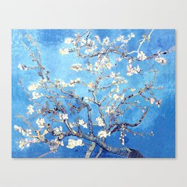 Vincent Van Gogh Almond Blossoms. Sky Blue Canvas Print