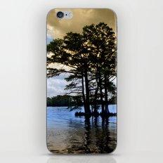 Cypress Trees iPhone & iPod Skin