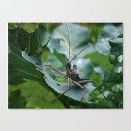 The Assassin--Animal Photography Prints Canvas Print