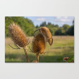 Can i help you. Canvas Print