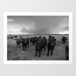 Hanging Out - Black and White Photo of Cows in Kansas Art Print