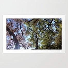 Dos Picos Ramona Oak Tree Art Print