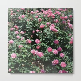 Pink Mini Roses and Eucalyptus Mint Green Leaves Metal Print