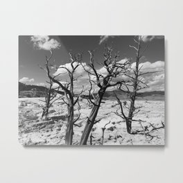 Dead Trees, Mammoth Hot Springs, Yellowstone National Park, Wyoming Metal Print