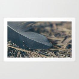 Black Feather Art Print