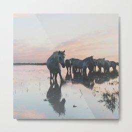 Camargue Horses I ... Metal Print