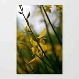 Come away with me my love Canvas Print