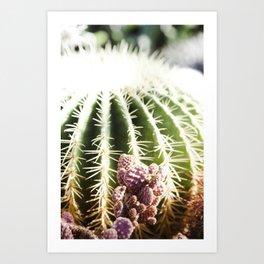 Cactus in the Sunlight Art Print