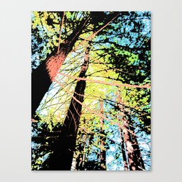 Tall Trees Sunny Day Canvas Print