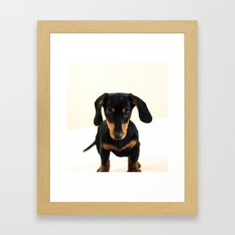Weenie dog (color) Framed Art Print