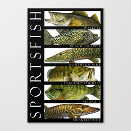 Sport Fish of North America Canvas Print