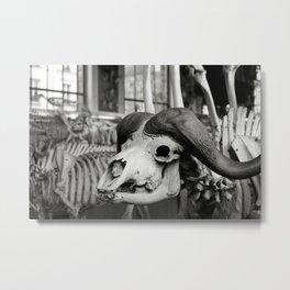 Gallery of Paleontology interior , Natural History Museum, Paris photo Metal Print