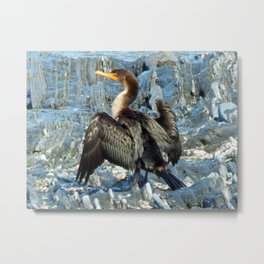 Double-Breasted Cormorant Dries Off Metal Print