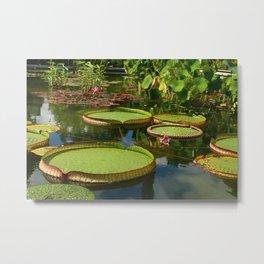 Waterlily Leaf Platters Metal Print
