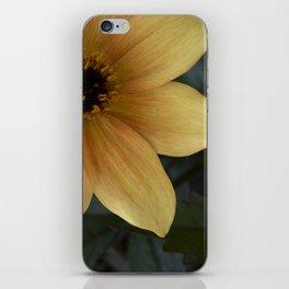 sunny bloom. iPhone Skin