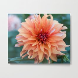 Flowers in the fall Metal Print