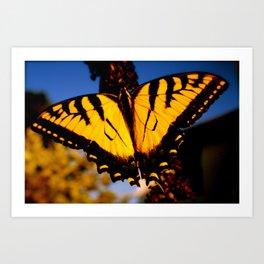 Photographs Art Print