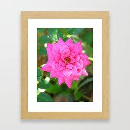 Rosa de invierno Framed Art Print
