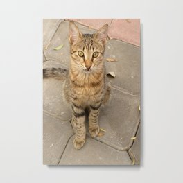 Cute Tabby Street Cat Metal Print