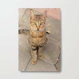 Cute Tabby Street Cat Metal Print