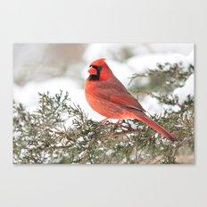Regal Cardinal Canvas Print