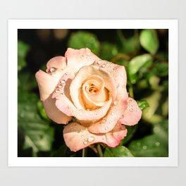 The light pink rose Art Print