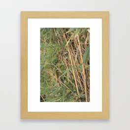Tranquility Within The Bamboo Framed Art Print