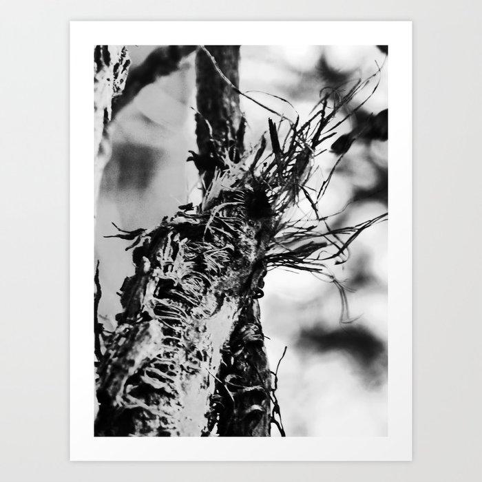 ragged vine III Art Print
