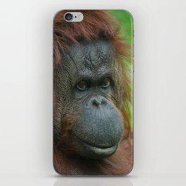 Female Orangutan iPhone Skin