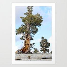 Tree Growing in Granite Art Print
