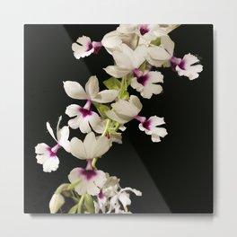 Calanthe rosea Orchid Metal Print