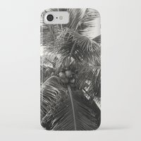 coconut wishes iPhone & iPod Cases featuring Coconut! by Chandon Photography