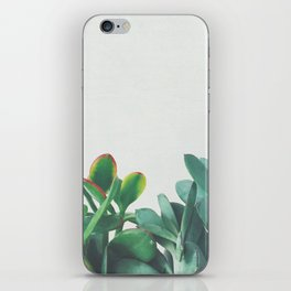 Crassula Group iPhone Skin
