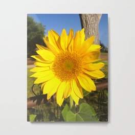 Country Sunflower Metal Print