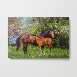 Mother horse with little foal Metal Print