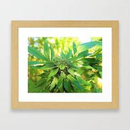 Jamaican Grown Framed Art Print