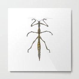Stickbug Metal Print