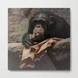 bored chimpanzee monkey animal zoo Metal Print