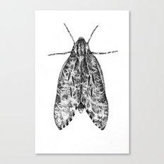 moth Canvas Print