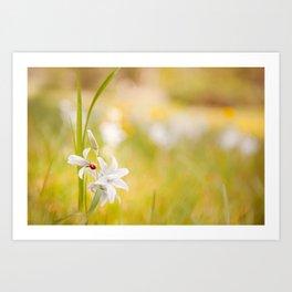 White flower with ladybug Art Print
