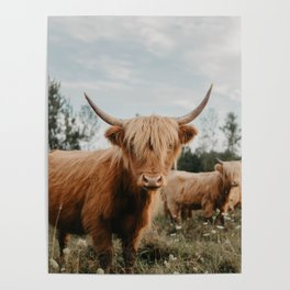 Highland Cow In The Country Poster