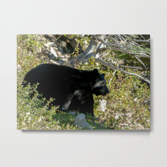 Black Bear On Watch Metal Print