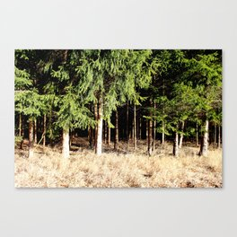 Germany Forest 1 Canvas Print