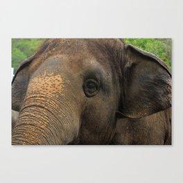 Elephant closeup Canvas Print