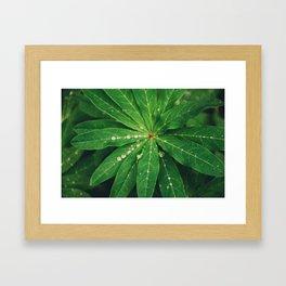 Diamond Leaf Framed Art Print