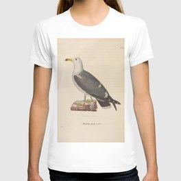 larus melanurus3 T-shirt
