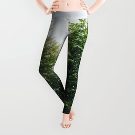Winter Pine Tree Forest (Color) Leggings
