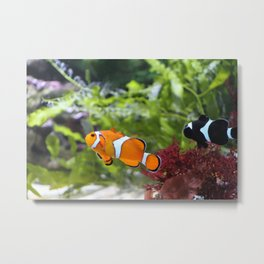 Finding Nemo! Metal Print
