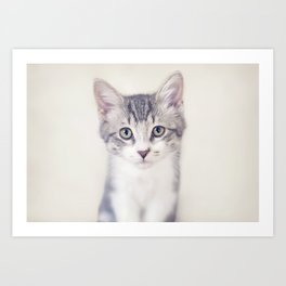 Portrait of a Kitten Art Print